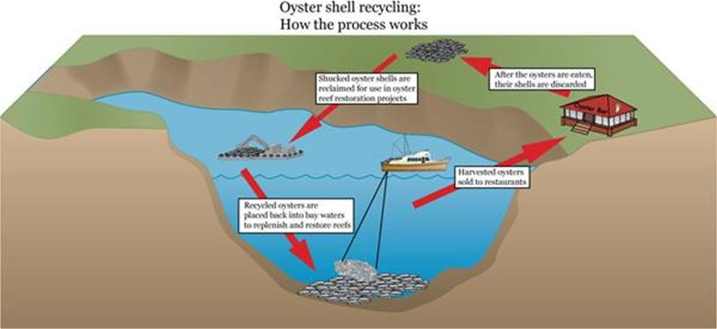 oyster-shell-recycling